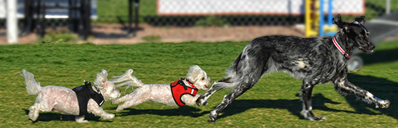 2 New Fenced Pet Parks